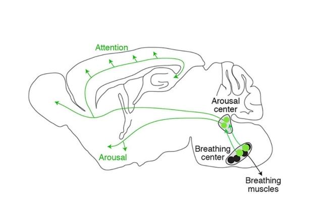 breathing-tranquility-neurosciencneews